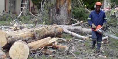 Tree Felling Pellissier